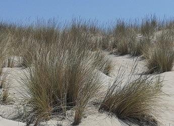 Management of Sand Dune Ecosystems