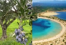 Enhancing biodiversity and ecosystems through engaging businesses in Messinia
